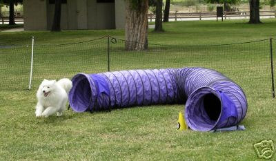Akc Regulation Agility Ring Size